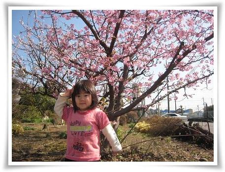 あーちゃん桜