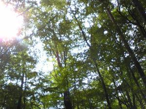2010 9月11・12 軽井沢+035_convert_20100928230903