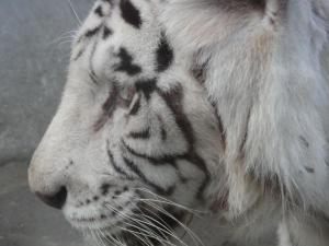 2010+11+23+東武動物公園+007_convert_20101129233132