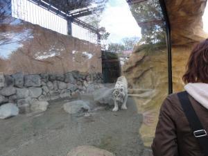 2010+11+23+東武動物公園+005_convert_20101129233041