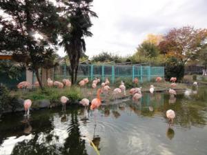 2010+11+23+東武動物公園+002_convert_20101129232942