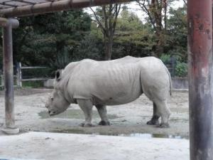 2010+11+23+東武動物公園+032_convert_20101129233838