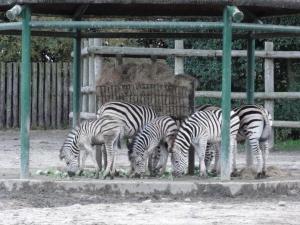 2010+11+23+東武動物公園+033_convert_20101129233904