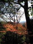 古美山の紅葉