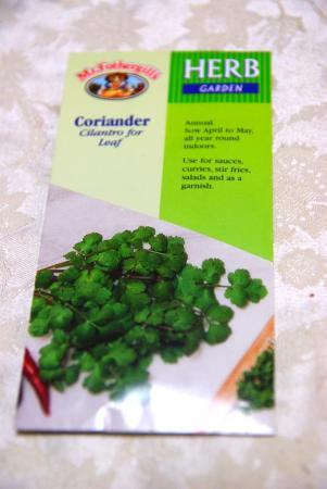 100126_coriander0.jpg