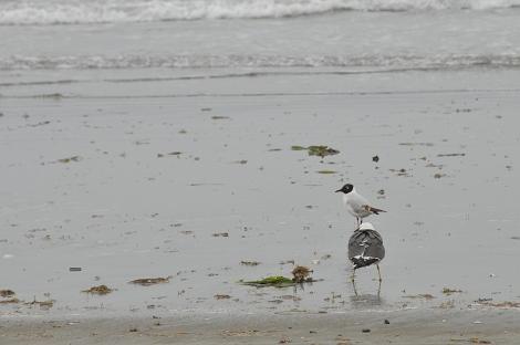 浜辺 その3