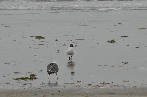 浜辺 その2