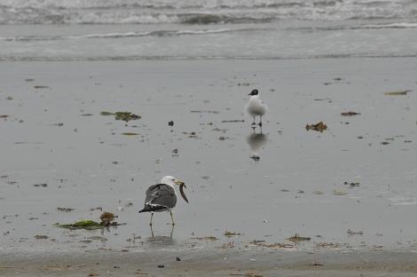 浜辺 その1
