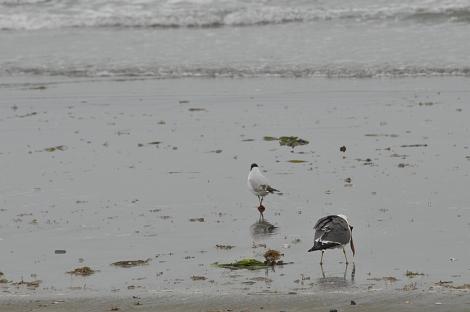浜辺 その4