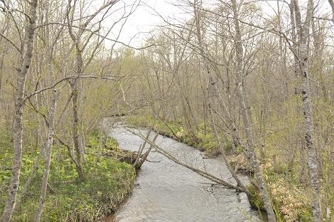 とある川。