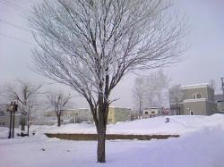 暖かい日が多い1月 この日は寒かった~~