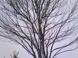 公園の木に・・・