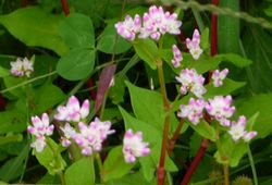 P1000800野の花