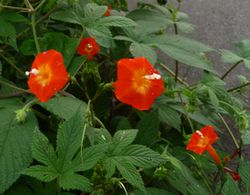 P1000793赤い花