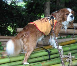ショコラ 003竹