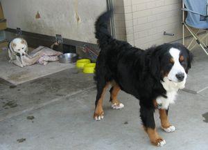 ショコラ 022病院犬