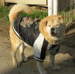 ショコラ 018病院犬