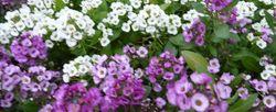P1000171花