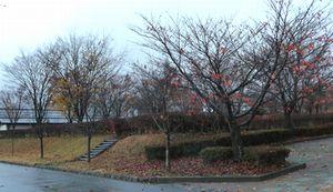 P1000190木々