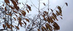 P1000192木々