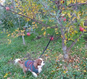 P1000291りんごの木