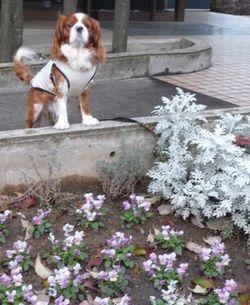P1000518花壇