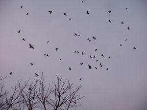 P1000830小鳥
