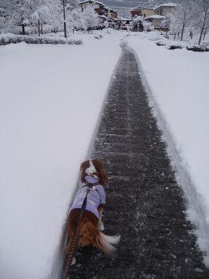 P1000954除雪済み