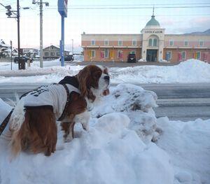 P1010063歩道雪
