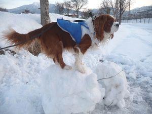 P1010067雪だるま