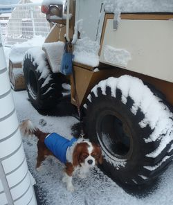 P1010111除雪車