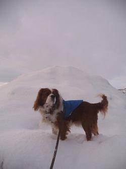 P1010232雪山