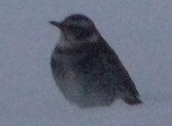 P1010430小鳥