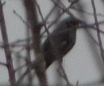 P1010702小鳥1