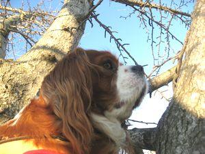 ショコラ 004銀杏の木