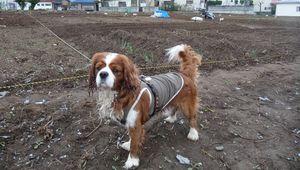 P1000141市民農園