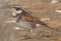 P1000200小鳥2