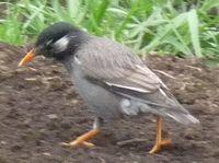 P1000334小鳥