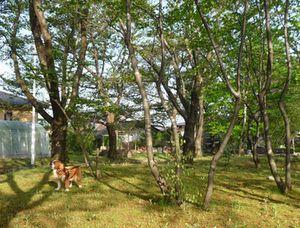P1000470公園