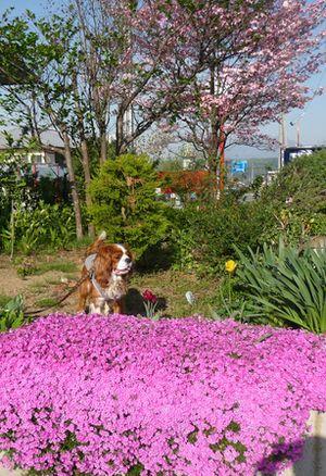 P1000489花壇