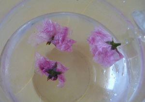 P1000589桜茶