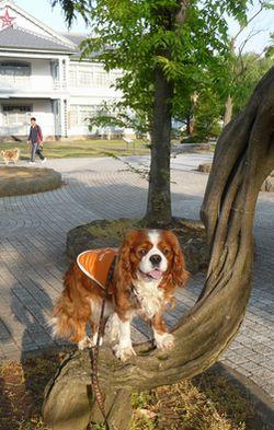 P1000629藤の木