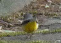 P1000789小鳥