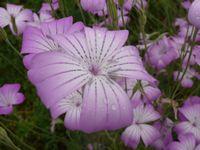 P1000997花