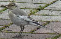 P1010369小鳥