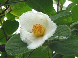 P1010441花壇3