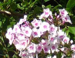 P1010551お花