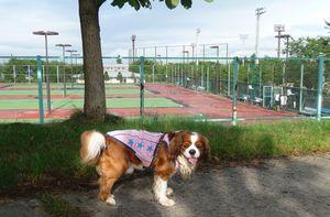P1010712テニスコート