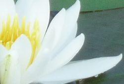 P1020071花びら