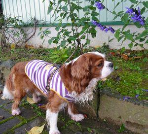 P1020560紫花